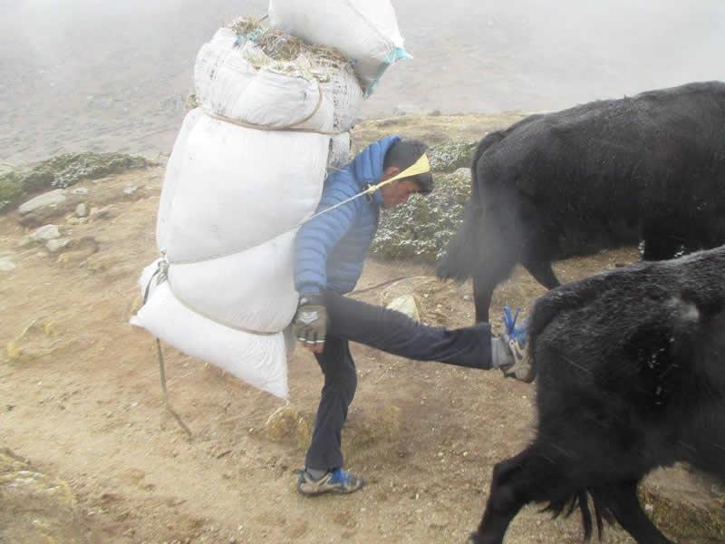 Animals on Everest Base Camp